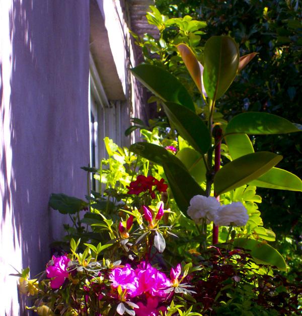 Aquella flor de luz inmarcesible
