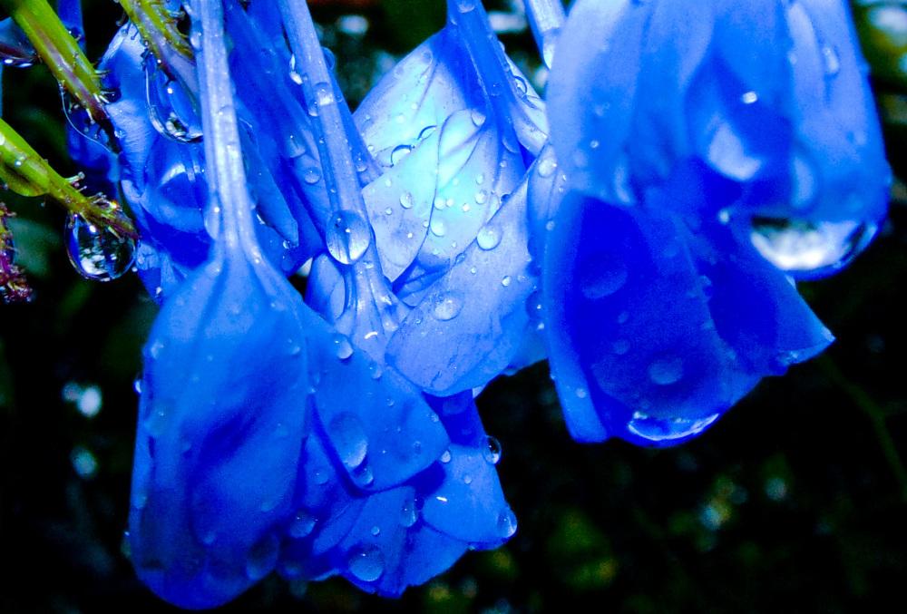 Gotas de lluvia 1 - 3