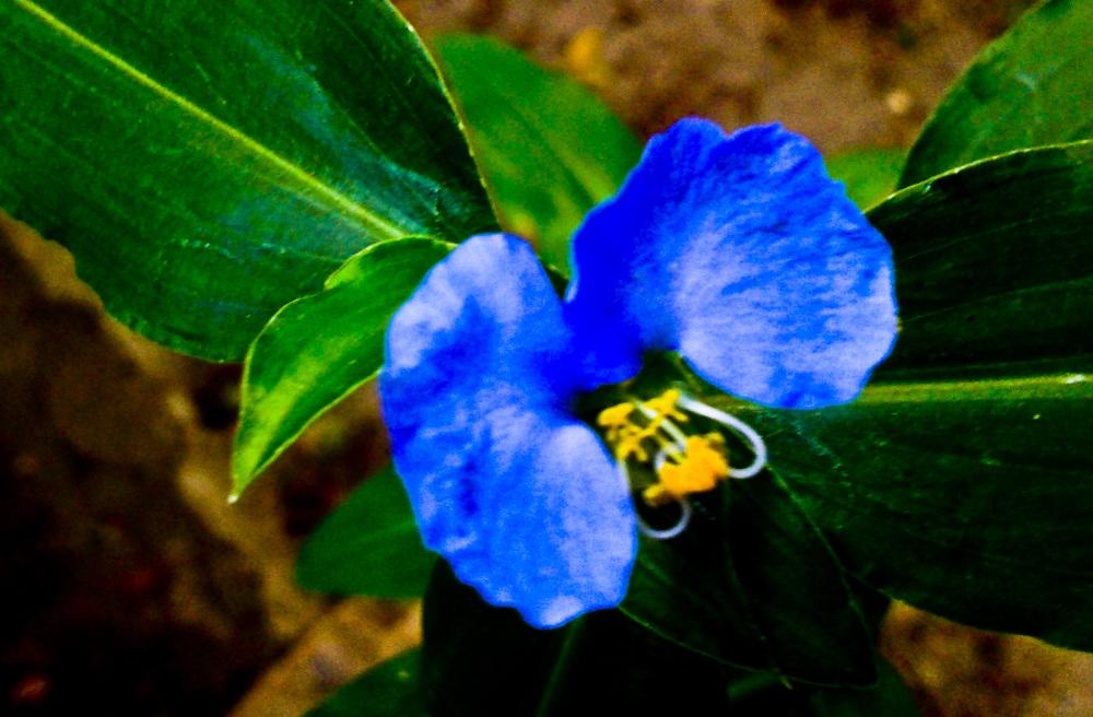 Flores 3 - 6