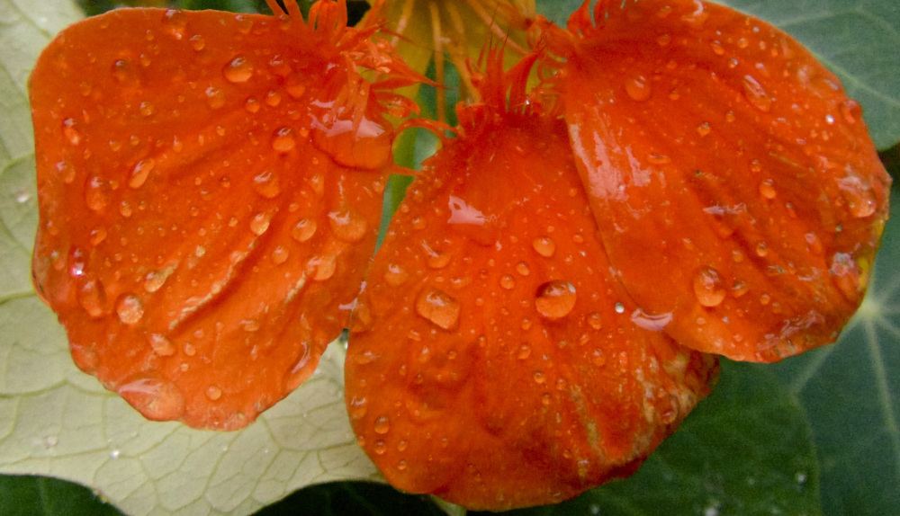 Gotas de lluvia 2 - 6