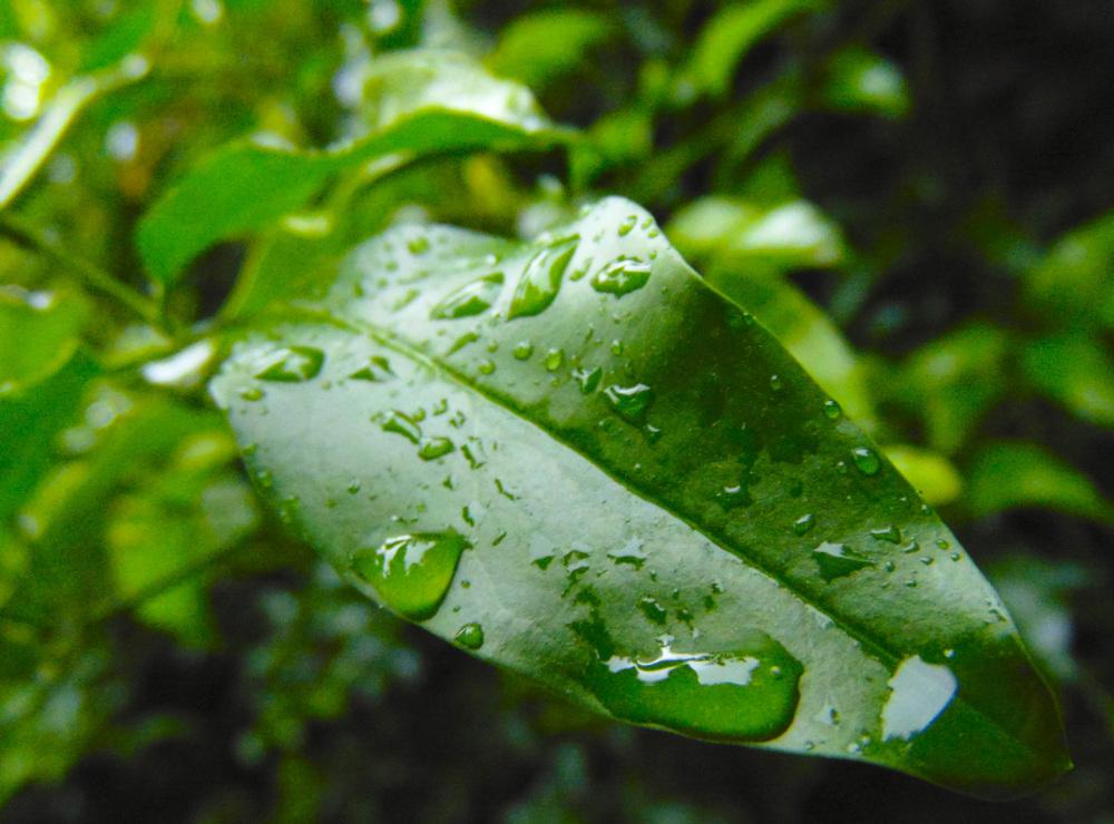 Gotas de lluvia 4 - 6