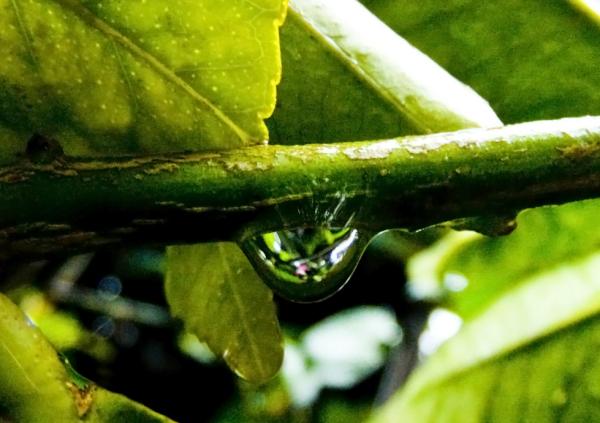 Gotas de lluvia 5 - 6