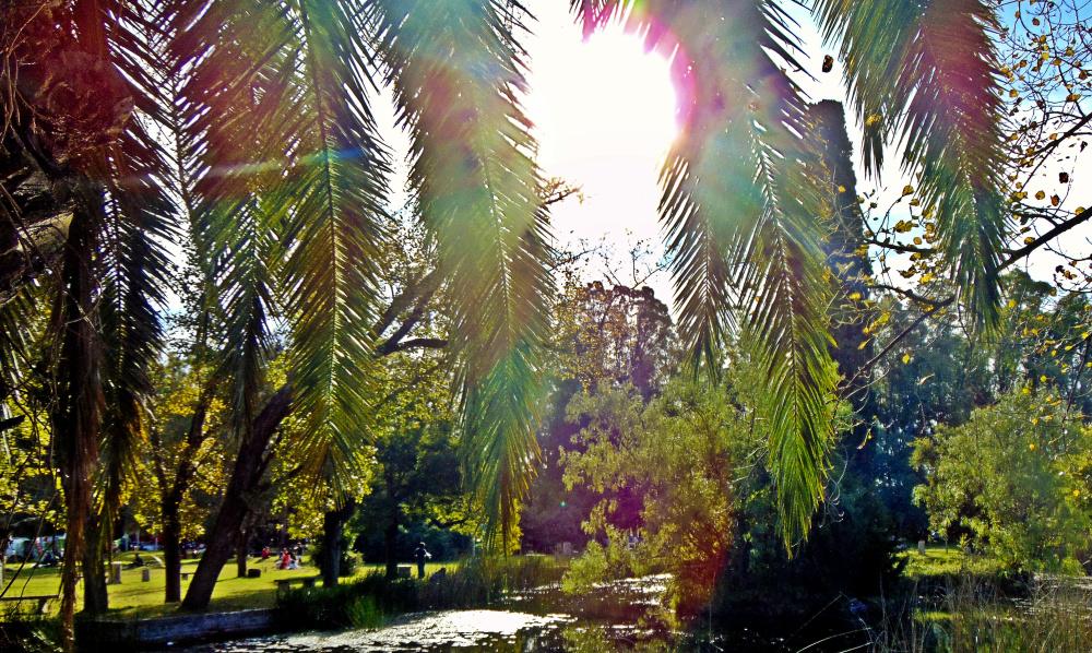 Rayos de sol sobre las ramas
