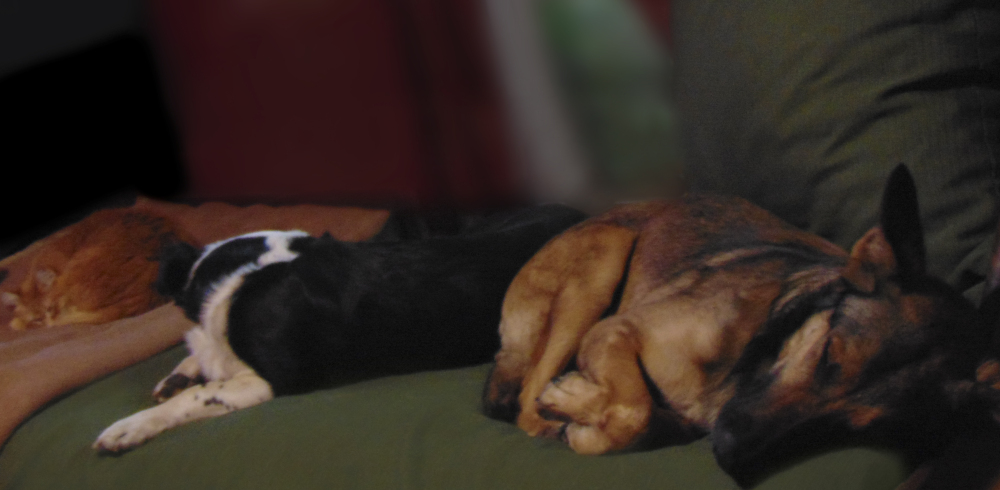 Moyi, Duke y Senya durmiendo la siesta