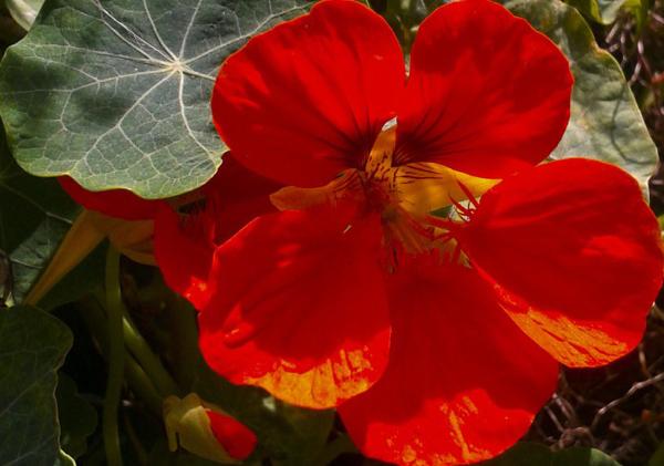 Flores de primavera 3 - 3