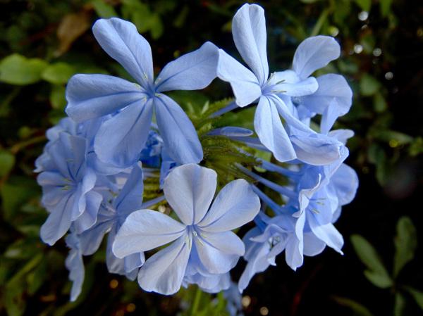 Las flores de mi jardín 2 - 5