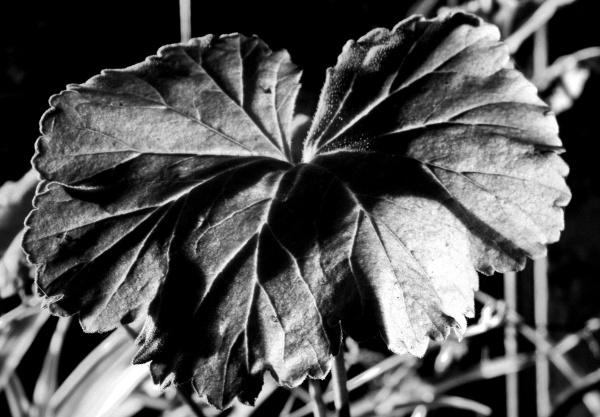 Luz y sombra   4 - 4