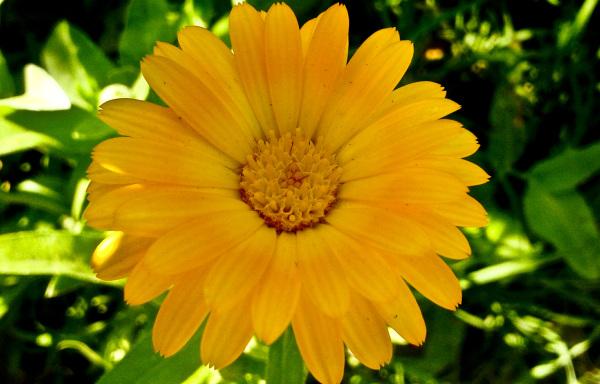 Flores de agosto 4 - 5