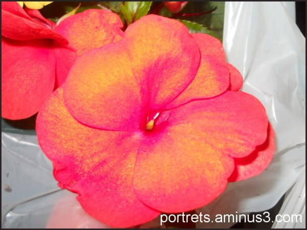 Pink color 2/3