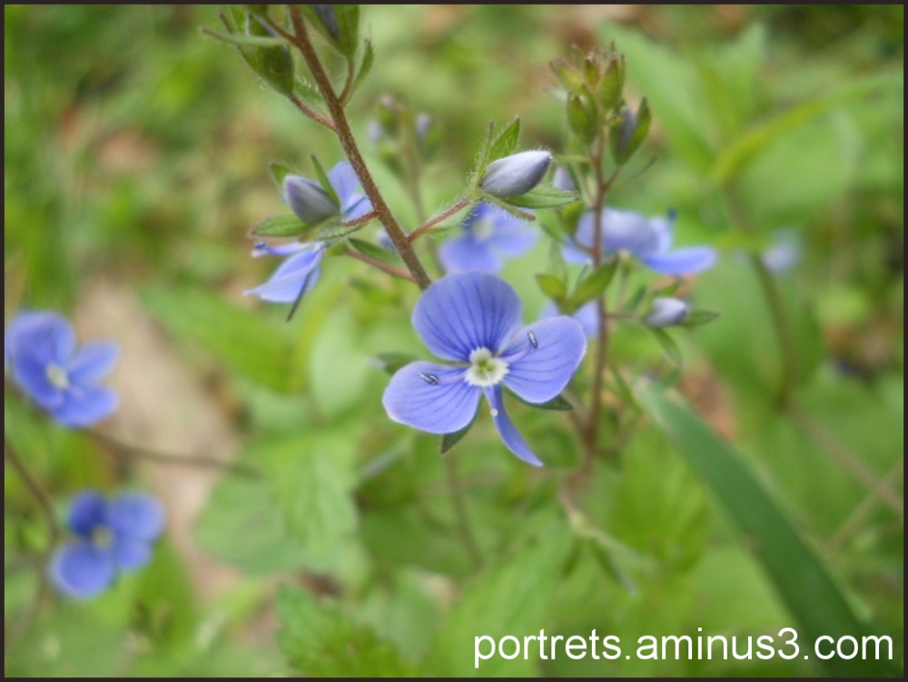 Blue 1/2