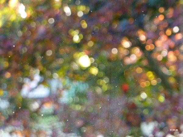 Bouquet   /  bokeh  d'automne
