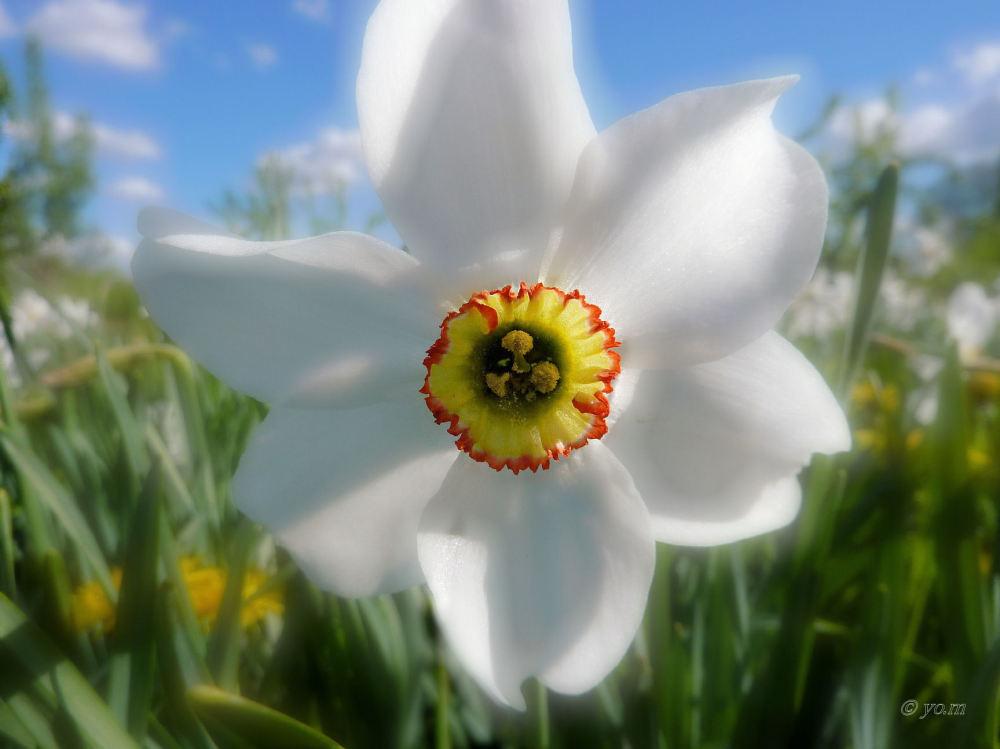 Sourire de printemps