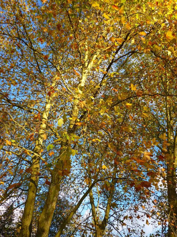 """"""" L'automne est une demeure d'or et de pluie """""""