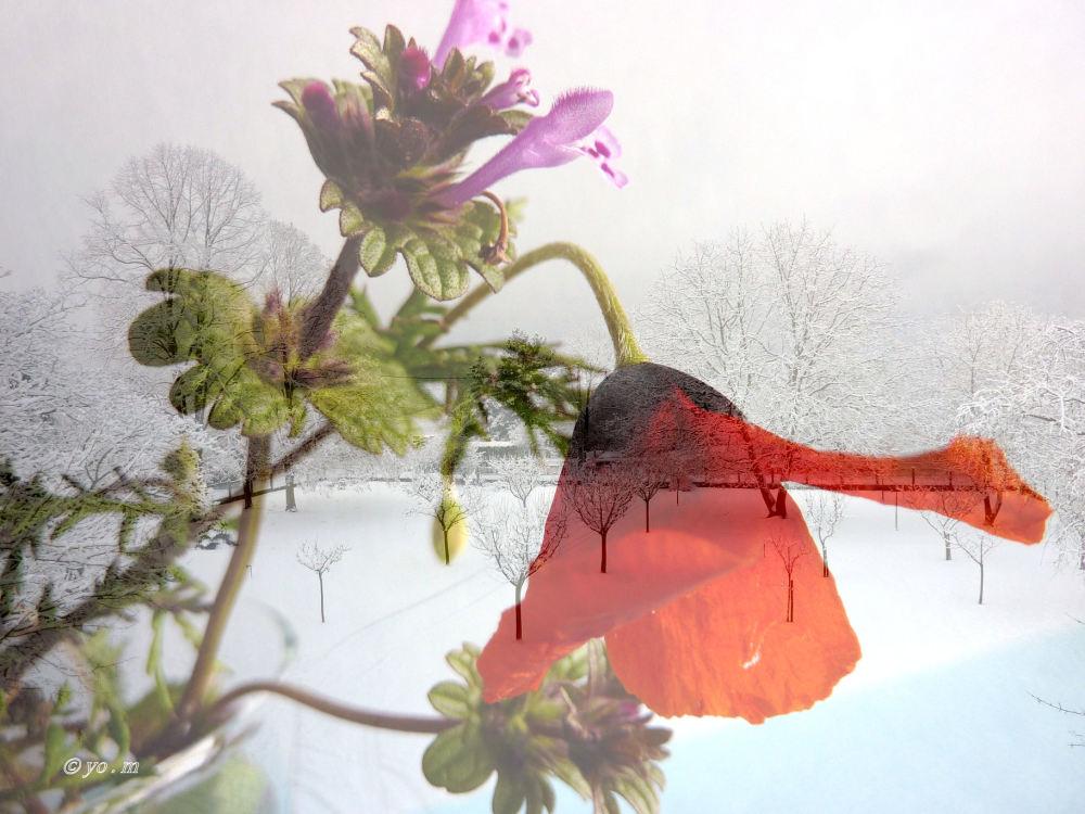 Fleurs d'été en hiver