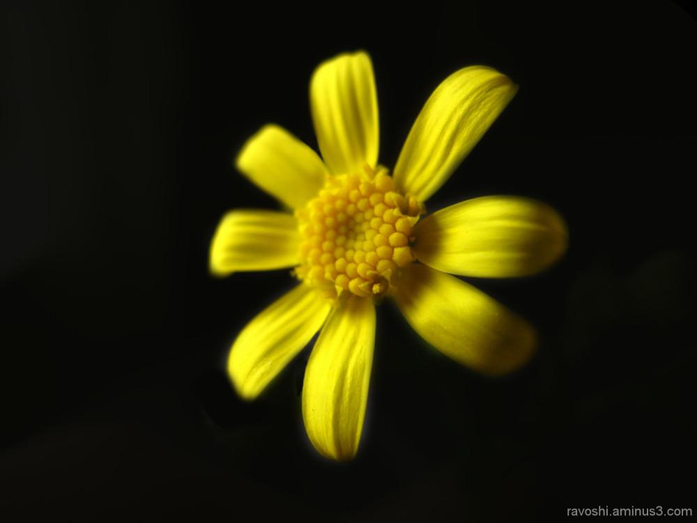 macro, nature, flower, plant