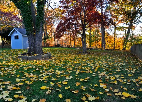 Backyard Fall colors