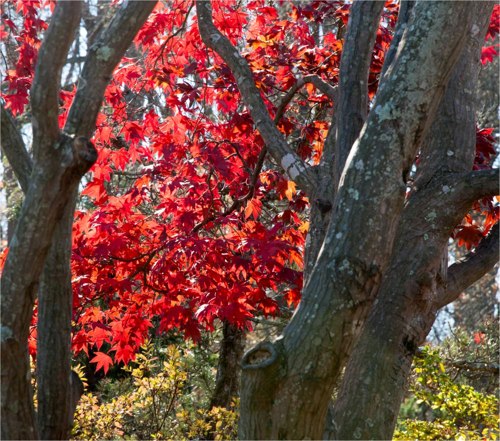 Brookside Gardens Fall Scene