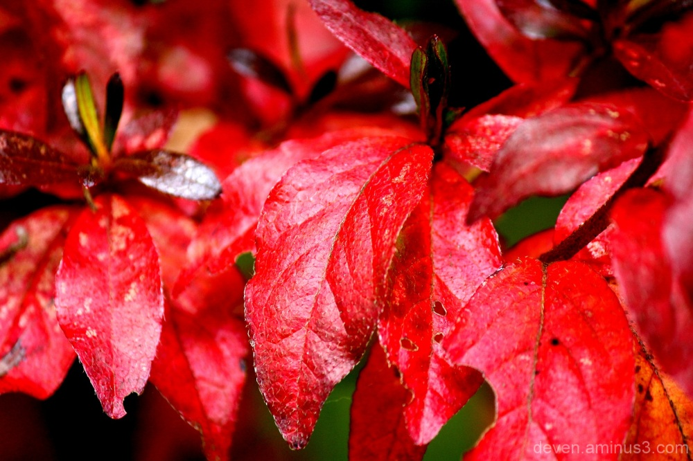 Red... Autumn Red...