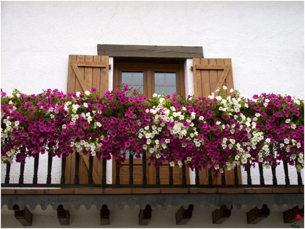 Overflowing flower boxes
