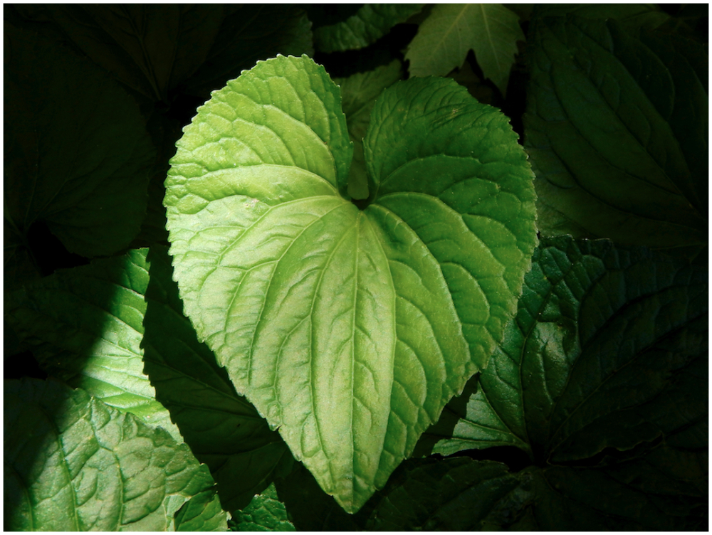 Light-hearted leaf