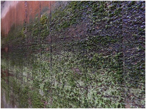 Damp underpass walls