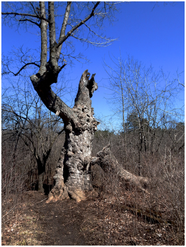 The Scary Tree