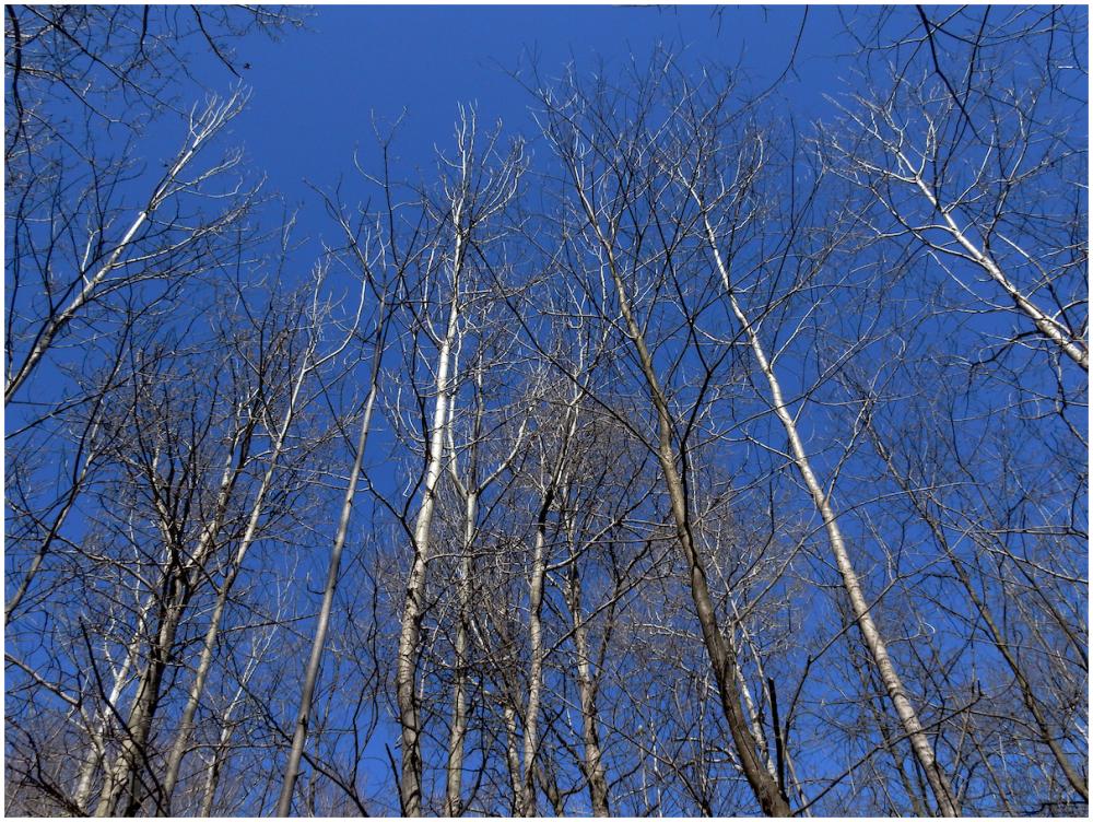 Sun-brightened trees