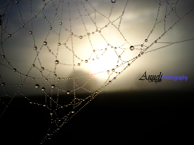 Droplets on web