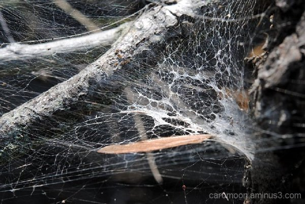 webbed tree