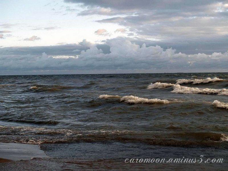 beach Point Pelee