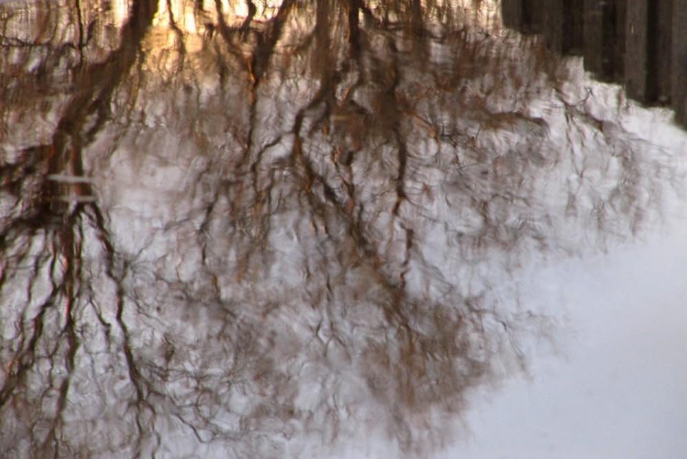 Ramure échevelée - Dishevelled branches