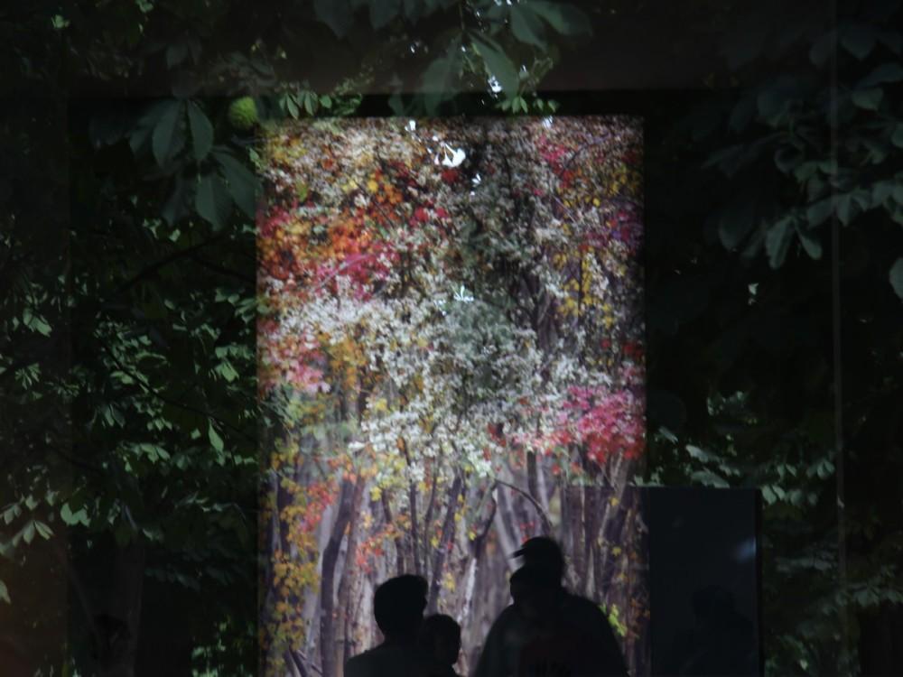 Vers un monde enchanté -Towards an enchanted world