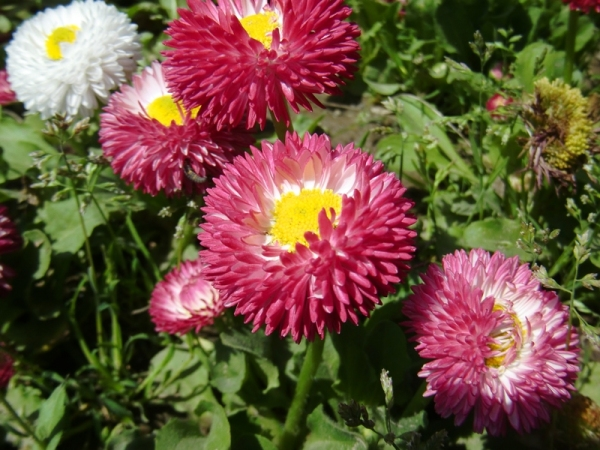 a vernal flower