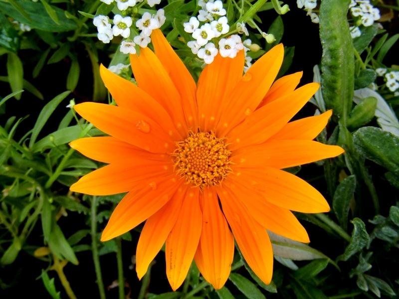 flower10????????
