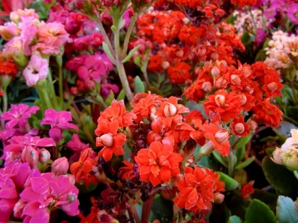 flower covered land