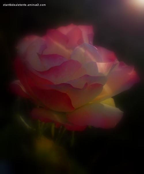 s'illuminer des dernières fleurs de l'automne 4/4