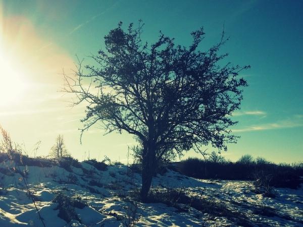 la nature en hiver 1/2