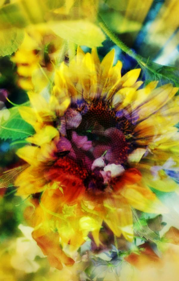 Sunflower Double