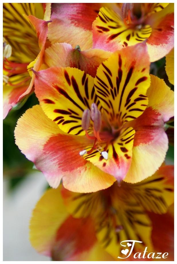 Panthère Fleurie