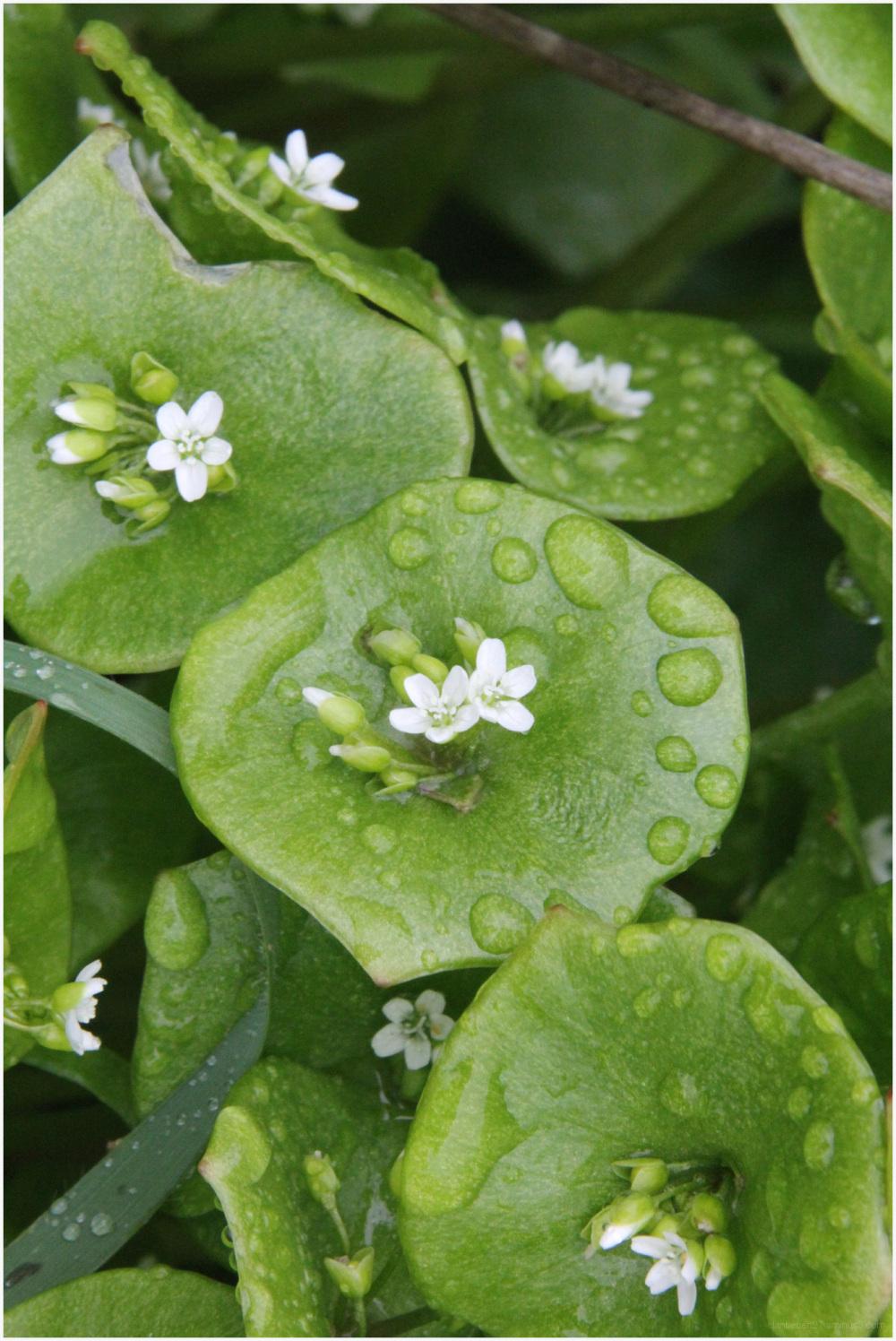 Plantes de rivage breton