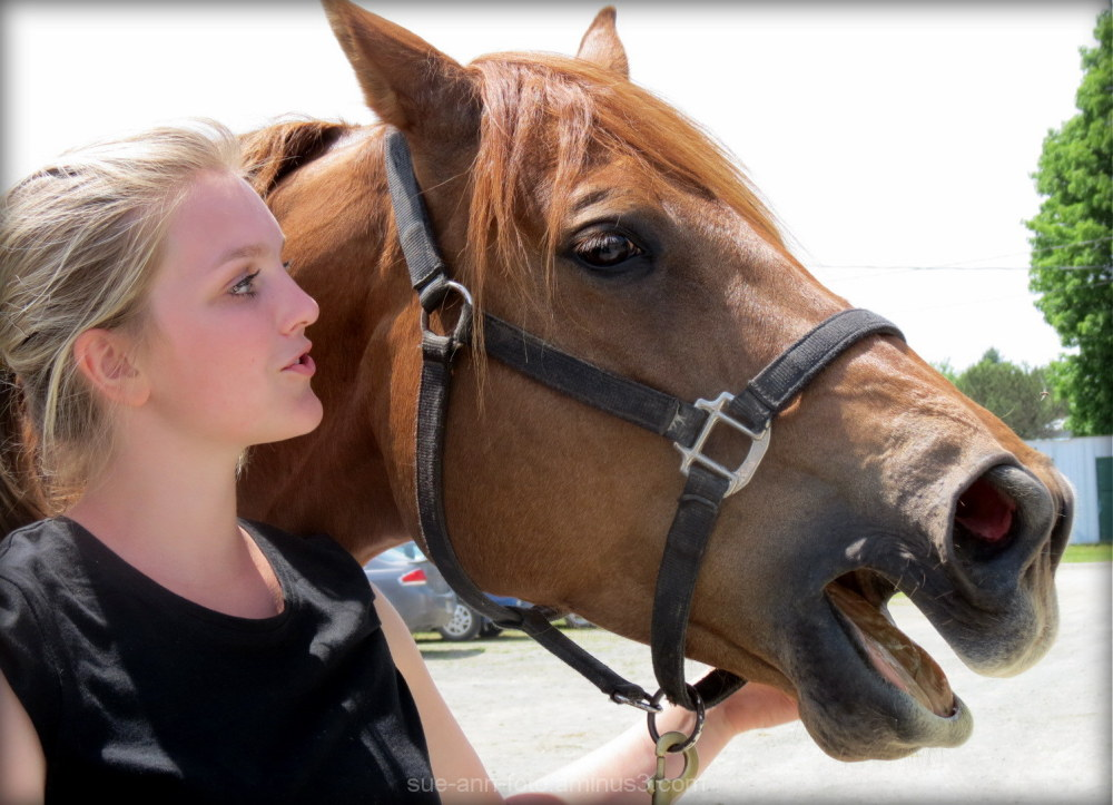 cowgirl competition horse