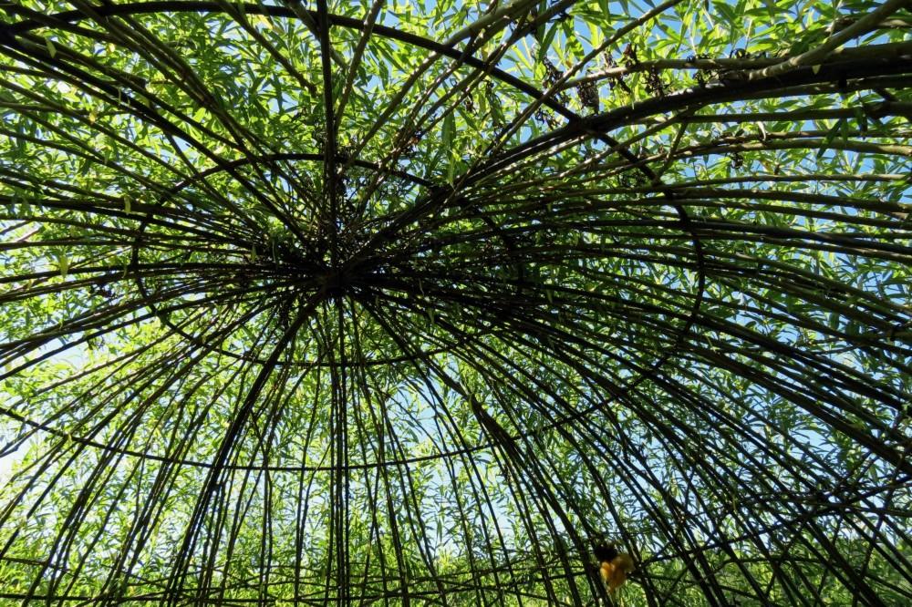 cage en arbre - tree cage