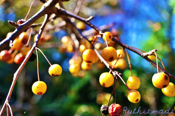 Fall Berries