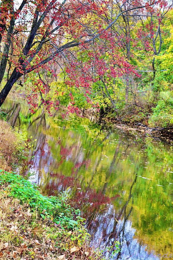 Autumn along the canal 1