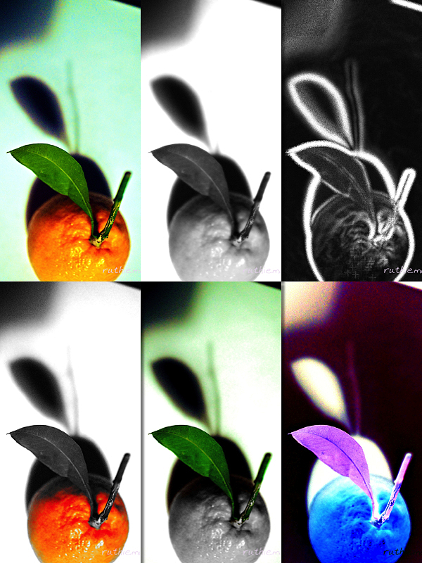 Mandarin orange experiment