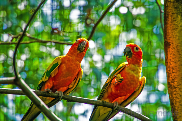 two birds in tree 1/2