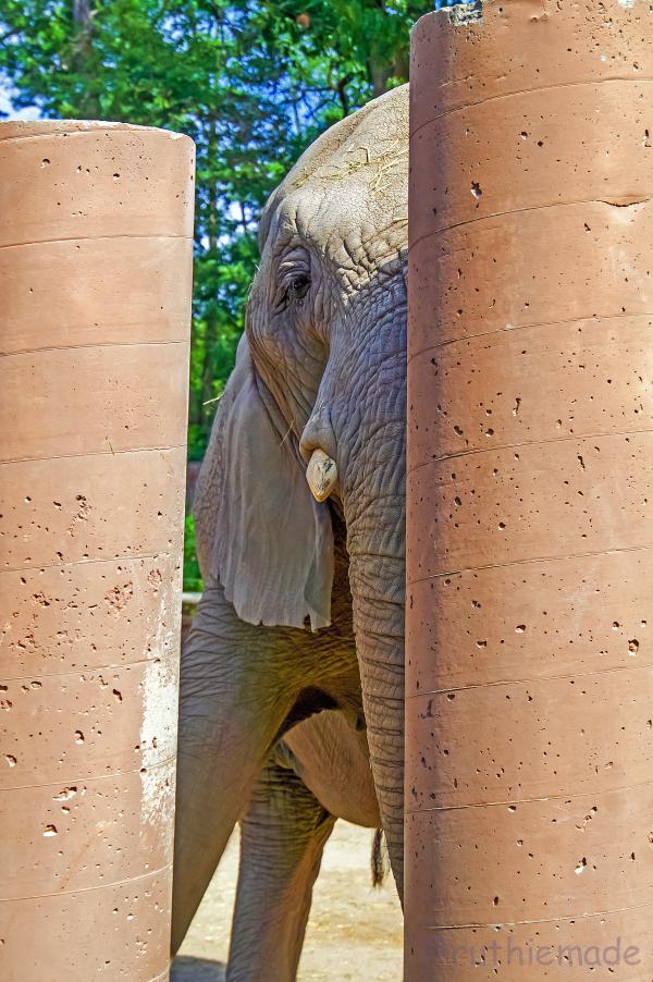 Peek-A-Boo Elephant 1/2