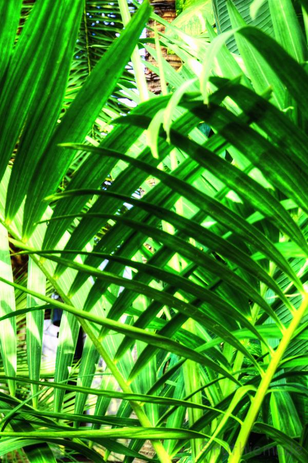 Green peek