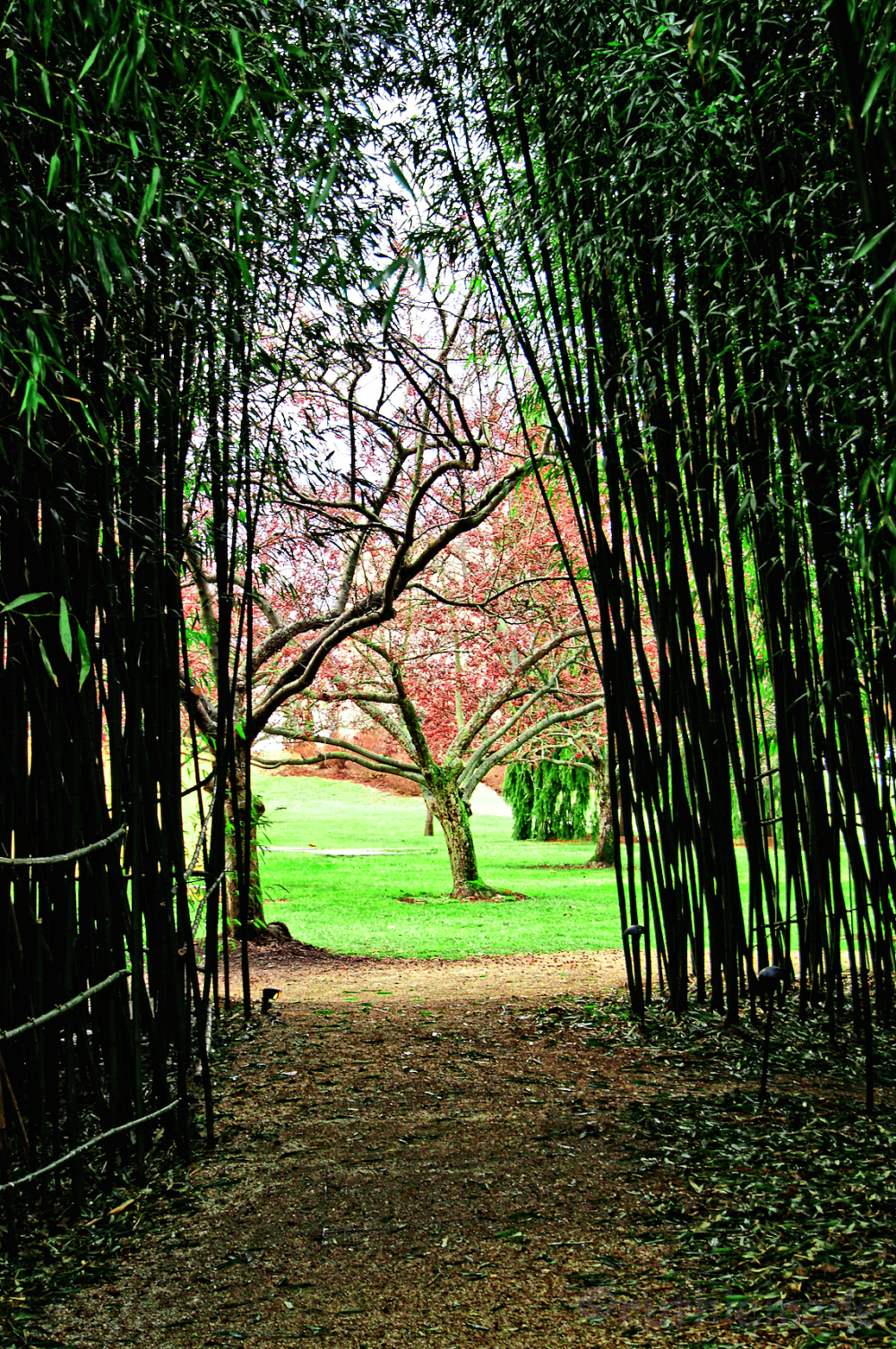 View through the Bamboo
