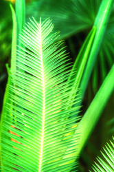 Green Feather from Longwood